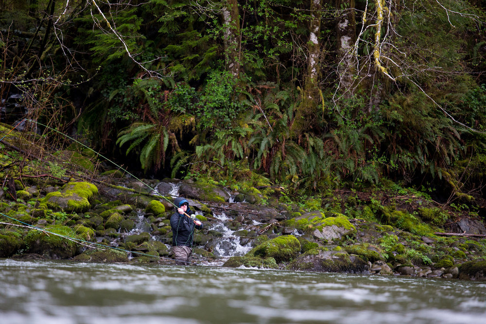 Olympic Peninsula winter steelheading in all its glory. Brilliant shades of green, diligent spey casts, and wetter than hell. It's a beautiful thing.