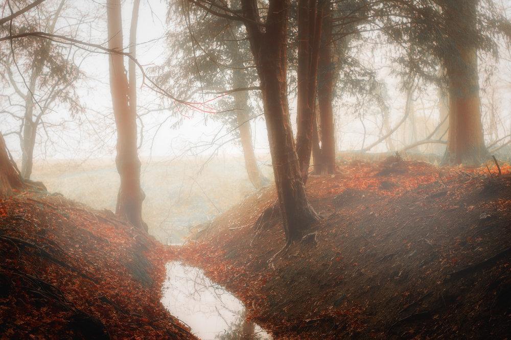 Autumn Mist.jpg