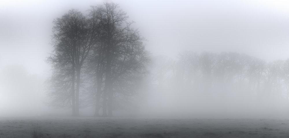 Misty Trees.jpg