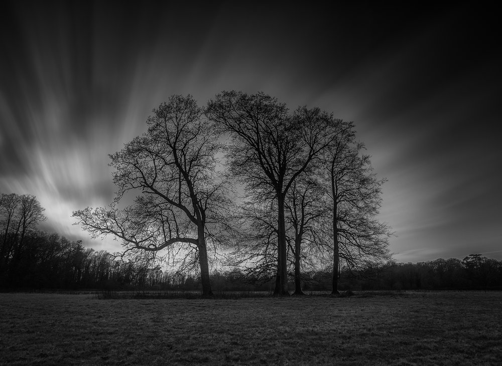 Winter-Trees-B&W-Dark NB.jpg