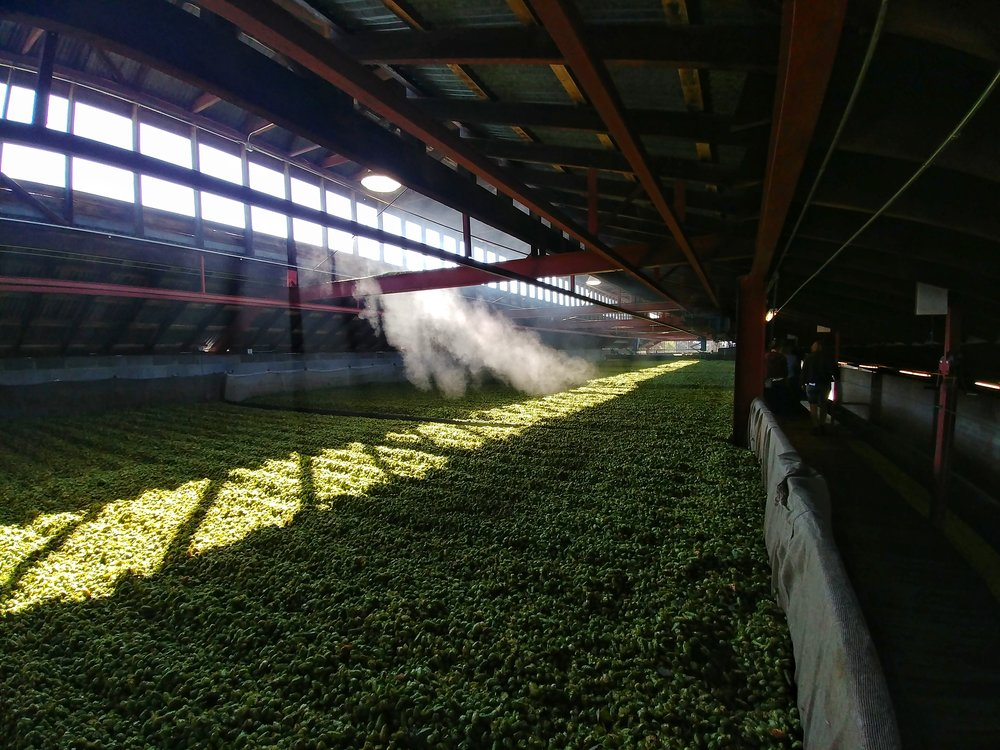 After they are picked, separated they get dried to stop them losing flavours. The smell inside this room was amazing!