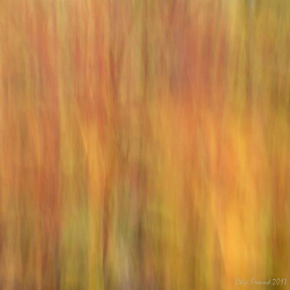 ICM-Fall-Colors-Online-2.jpg