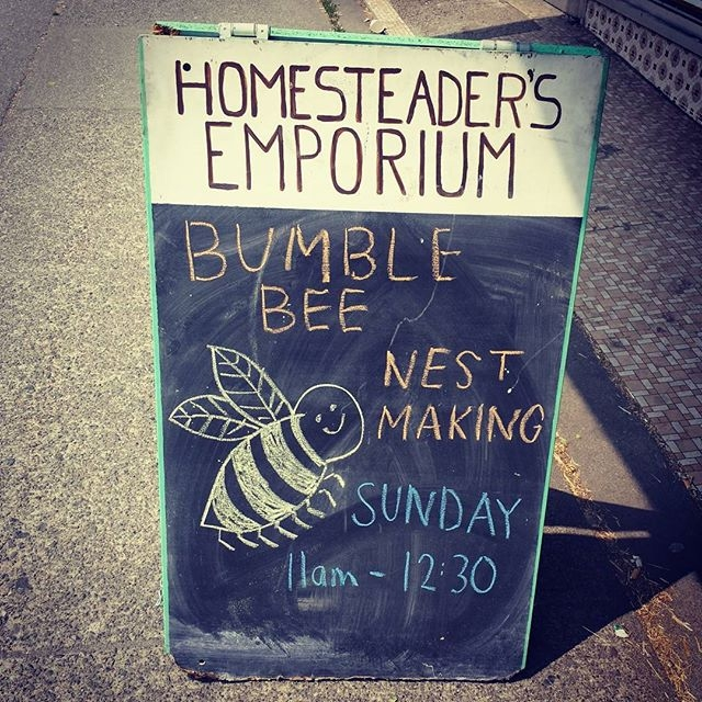 Learn about bees at the Homesteaders Emporium