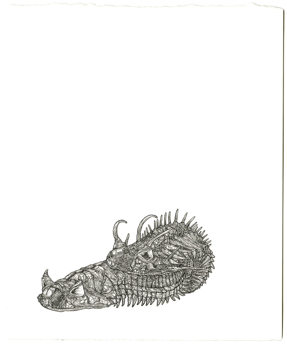 trilobites, ink on paper, 8.5in. x 7in., 2009