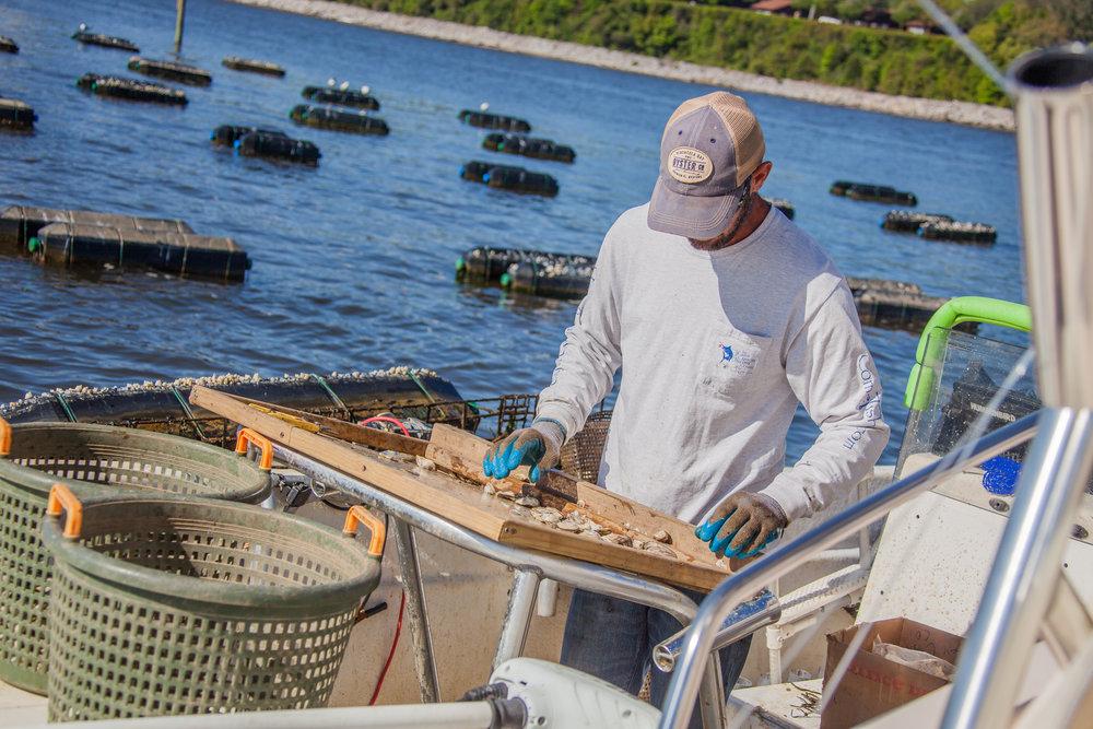 Pensacola Bay Oyster-030.jpg