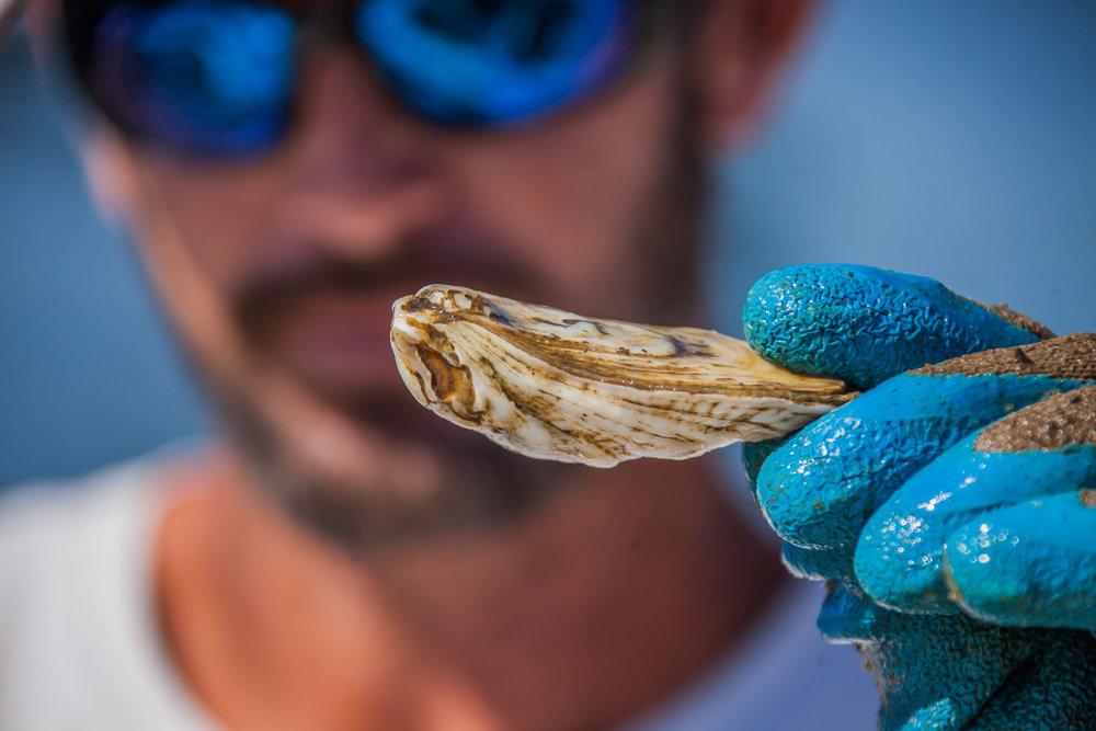 Pensacola Bay Oyster-035.jpg