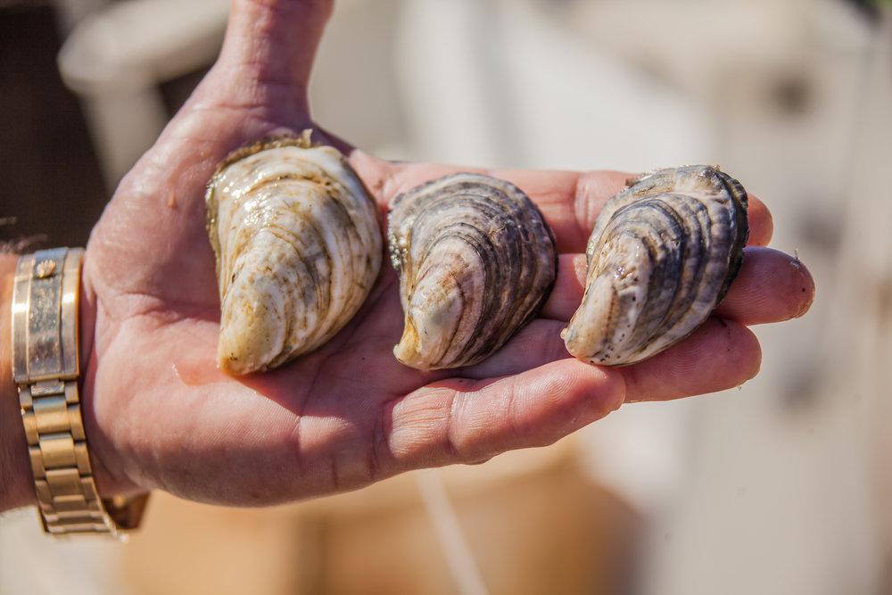 Pensacola Bay Oyster-065.jpg
