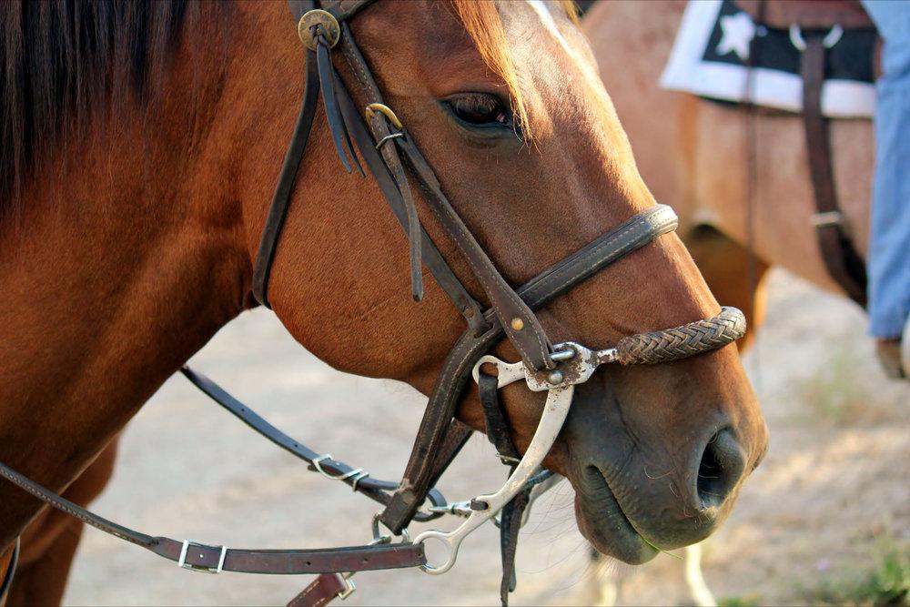 HS - Horses -