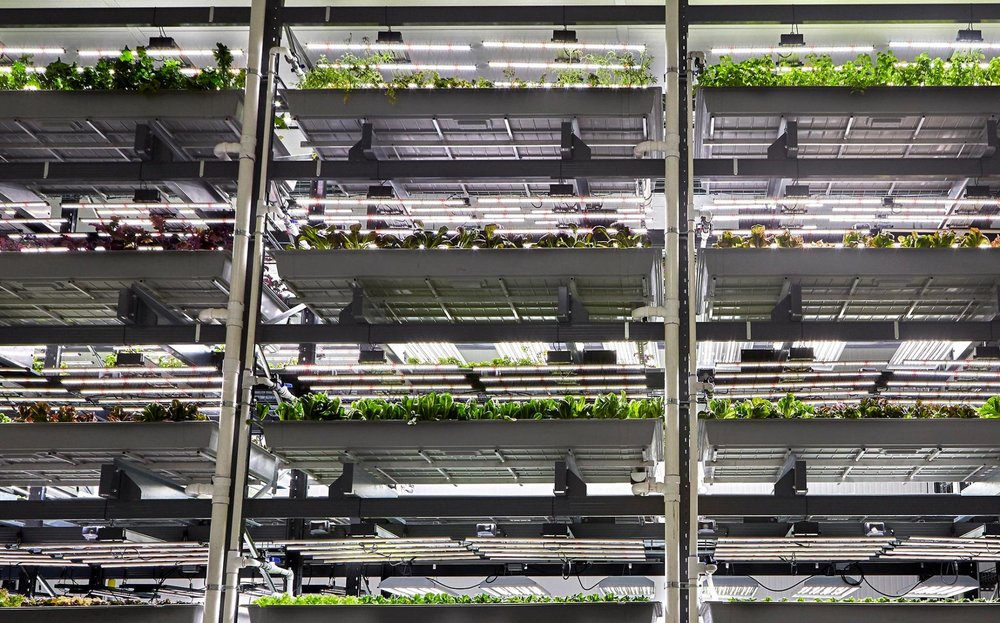 Startups are looking to food hungry cities by crops in warehouses, without soil or natural light. Photo by National Geographic.