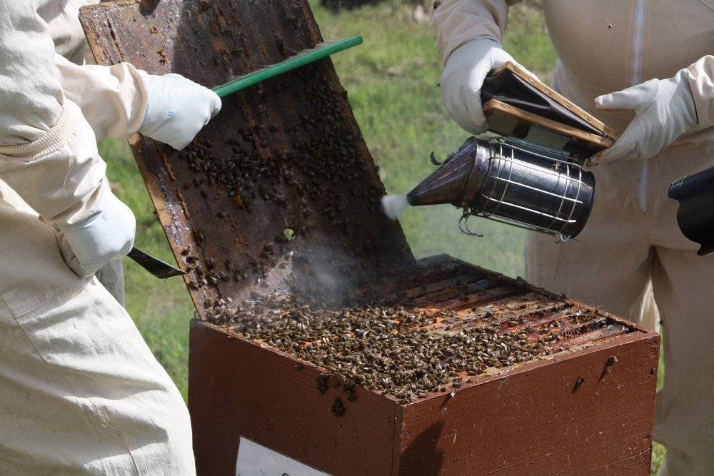 Proper tools and protective ware are an important part of keeping bees.
