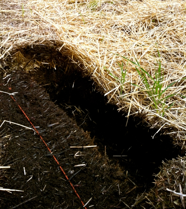 A layer of mulch covering the compost pile helps to keep it weed free all season.