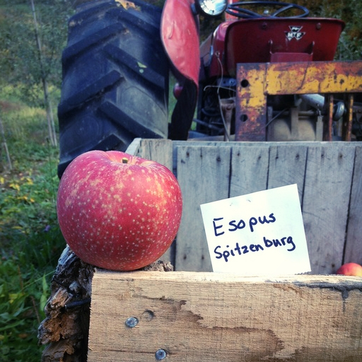 """Esopus Spitzenberg has a few things going for it,"" says Tim Dressel, owner of Dressel Farms in New Paltz, New York. ""First, it's named after the town of Esopus, NY, which is only about 10 miles from my farm. The apple was from a chance seedling, meaning it wasn't bred. It's rumored to have been Thomas Jefferson's favorite eating apple. Plus it's a gorgeous apple with a slightly elongated shape and beautiful ruby color."""
