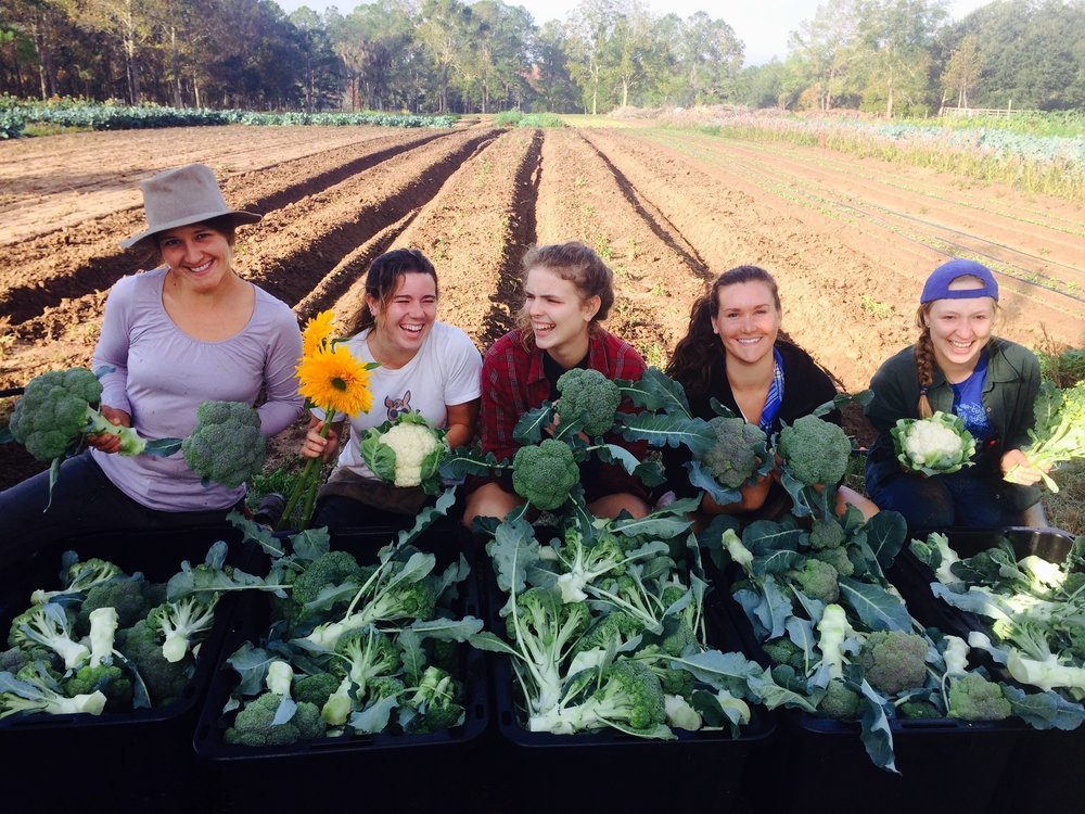 Emily (middle) and the rest of the harvest team prepping broccoli for the farmers market.
