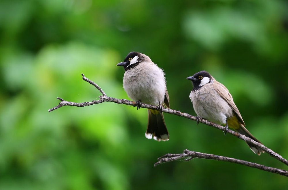 Attracting birds to your garden can be a huge help when it comes to pest management.