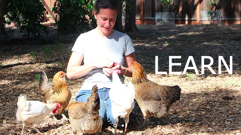 Isabelle Cnudde uses her chicken microsanctuary to educate the public about how to take care of chickens. Among other resources she shares is a guide to  backyard chicken care  from Animal Place. She also gives talks about the impact of animal agriculture on our planet.
