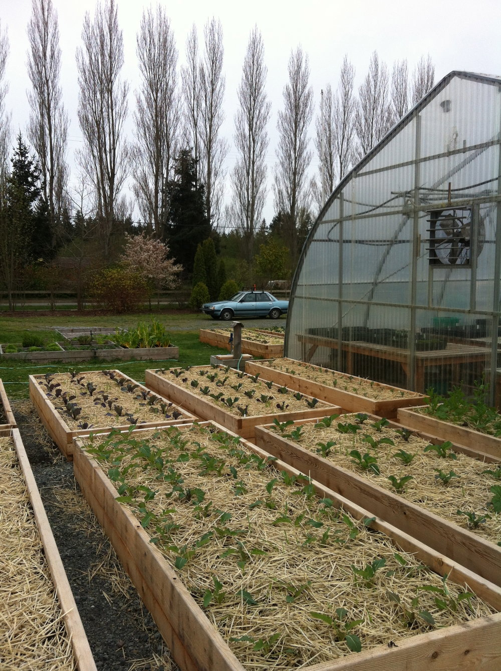 Raised beds are an efficient way to create a weed-free space for crops and feed your soil at the same time. It starts with a layer of straw to fight weeds and conserve moisture.