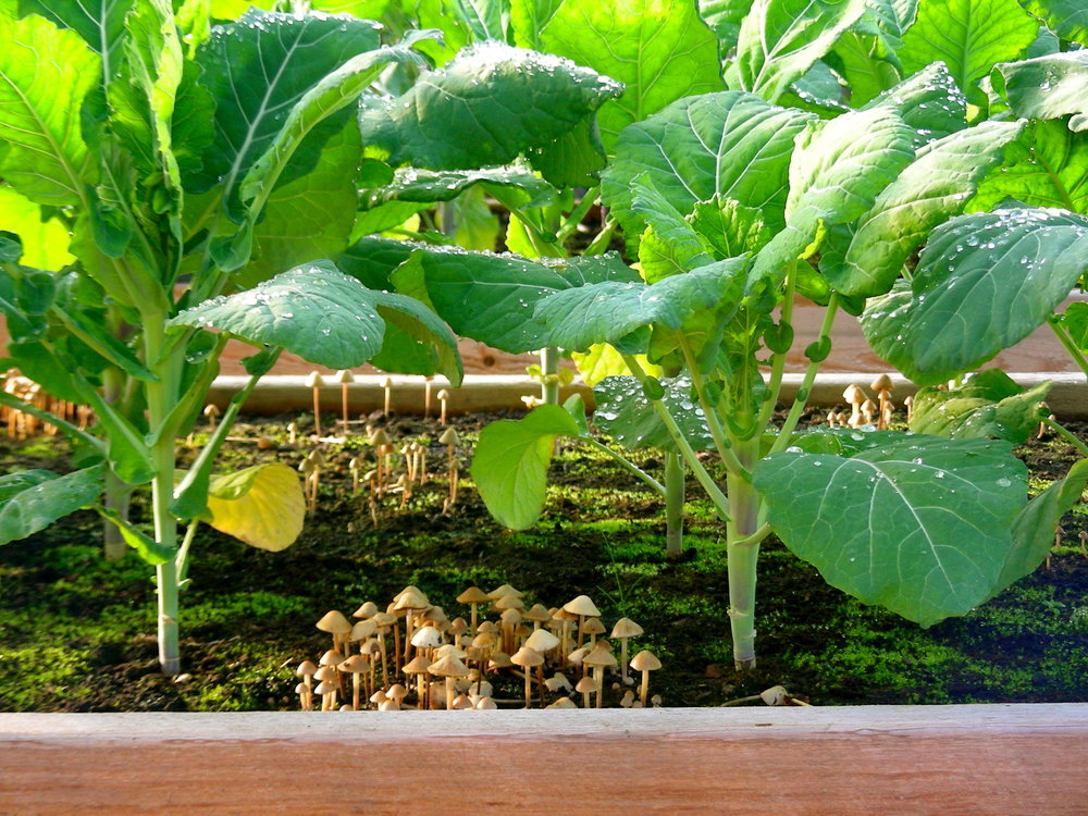 Undisturbed soil rich in carbon feeds fungi that creates a soil structure that locks in moisture and holds on to nutrients making your garden more resilient while locking carbon underground.