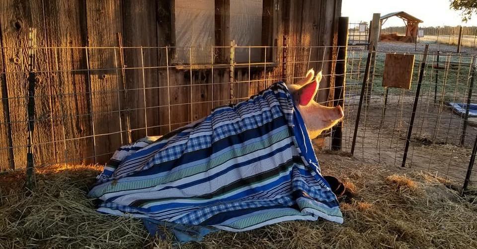 Winnie enjoys a sunrise at  Heartland Farm Sanctuary  in Verona, Wisconsin. Photo credit: C&N Photography