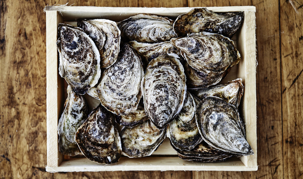 "Oysters are the proverbial ""canaries in the coal mine"" of climate change — an early warning sign of global changes to come.  Image Source"