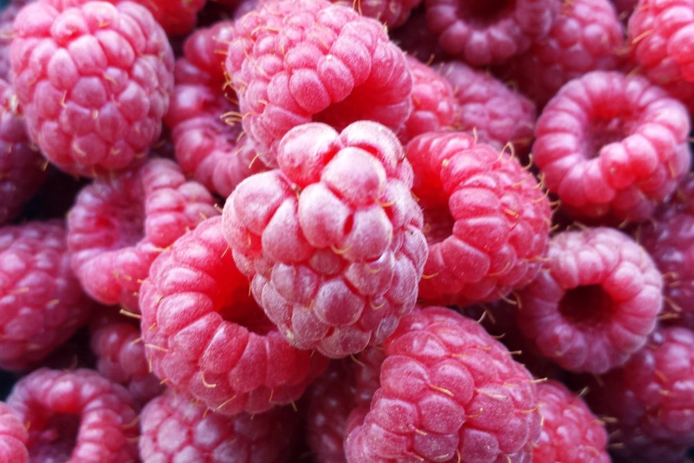 Raspberries are among my favorite perennials because they make a beautiful natural border against pests and ripen early in the spring