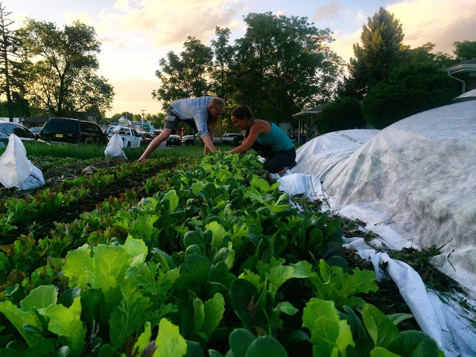 The Veg Yard is a Denver, CO urban farm network that turns lawns into vegetable gardens.  Photo source