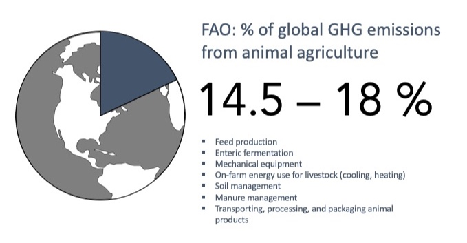 The Food and Agriculture Organization (FAO) of the United Nation has estimated that animal agriculture contributes between 14.5% and 18% of global GHG emissions. The FAO includes GHG emissions from feed production; enteric fermentation; on-farm mechanical equipment and energy use for livestock; soil and manure management; and transporting, processing, and packaging animal products.