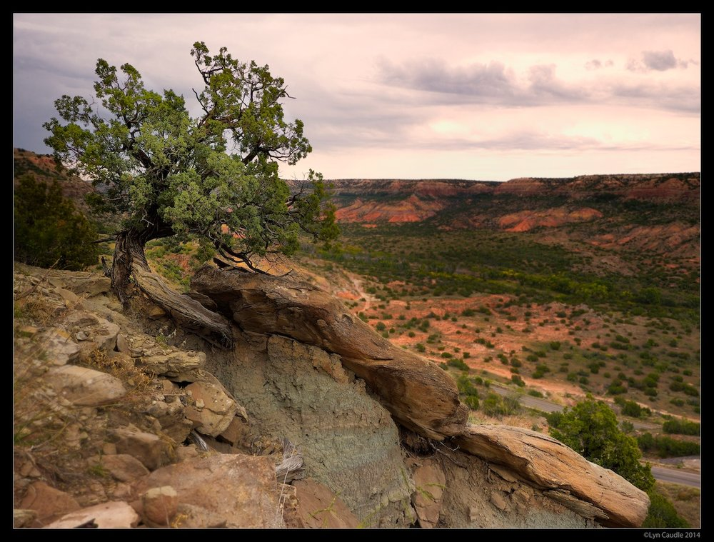 Canyon Tree.jpg