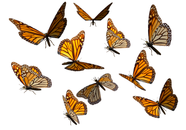 butterfly_clipart_png_monarch.png