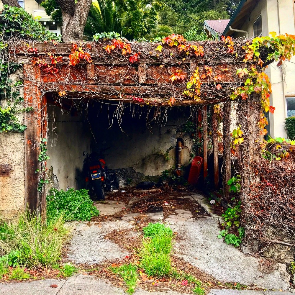 Garages change with the seasons. In a more lush time of year, this one looks  like this .