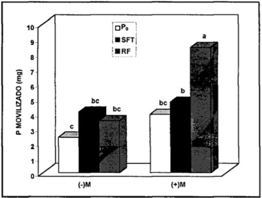 Figura 5. Efecto de la adición de dos fuentes de P sobre el rendimiento acumulado (g) de trébol rosado inoculada con HFM. (Borie y otros 1996)