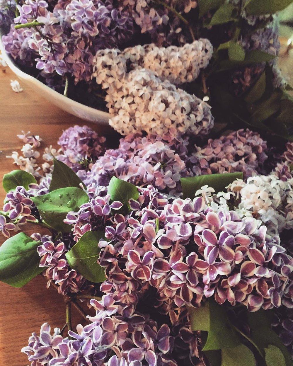 lilacs2016.jpg