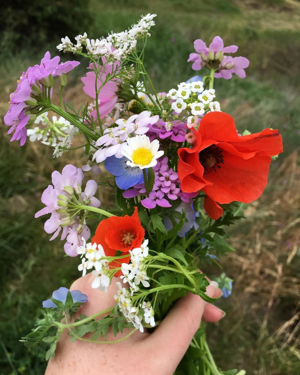 Another harvest highlight was this beautiful bouquet of wildflowers I grew from some seed blends from  West Coast Seeds .  They are so beautiful and great for attracting pollinators and other beneficial insects to the garden.  I will for sure be incorporating more flowers in my future gardens!
