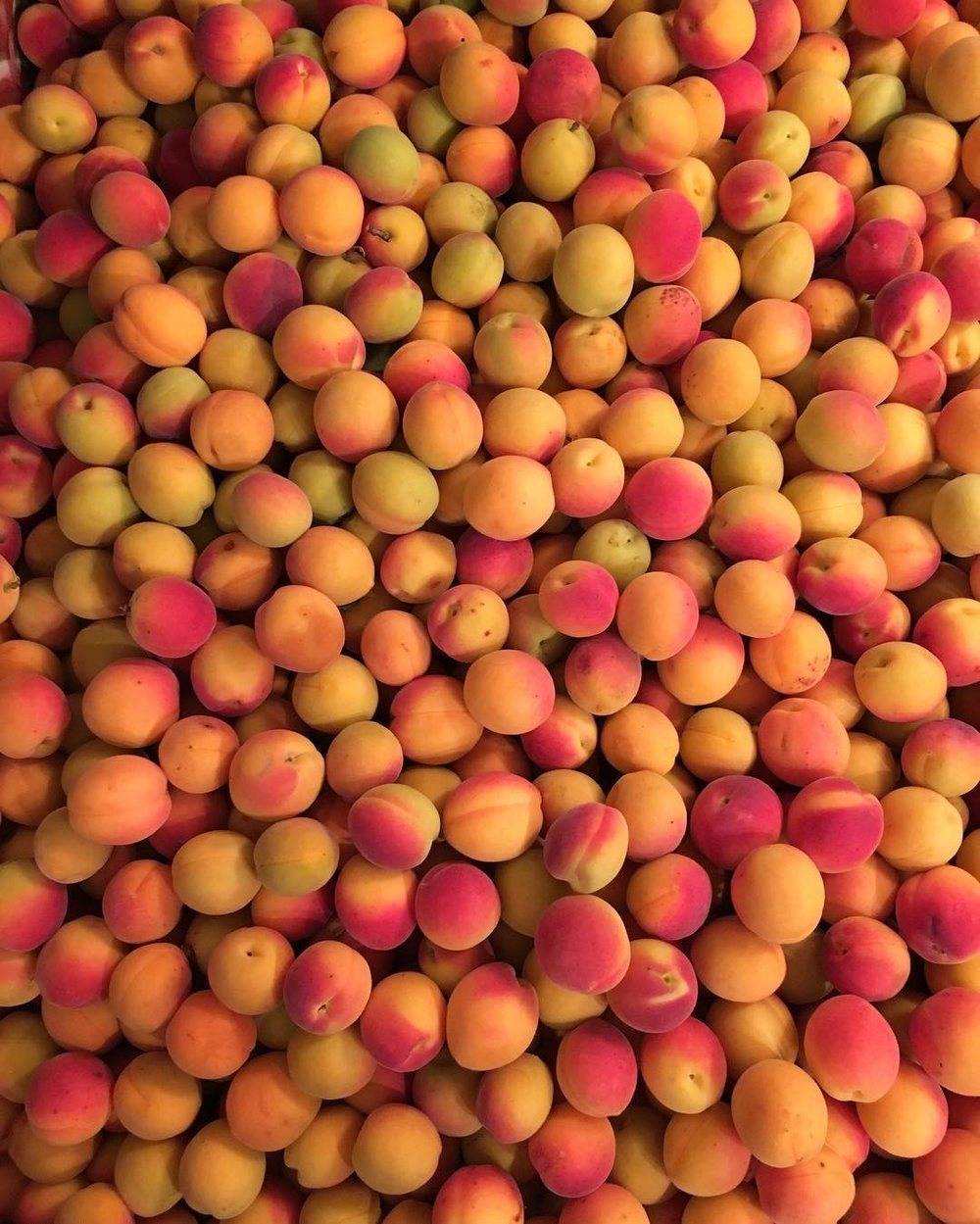 apricots2016.jpg