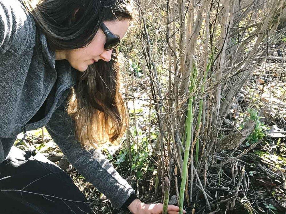 wild asparagus-4107.jpg