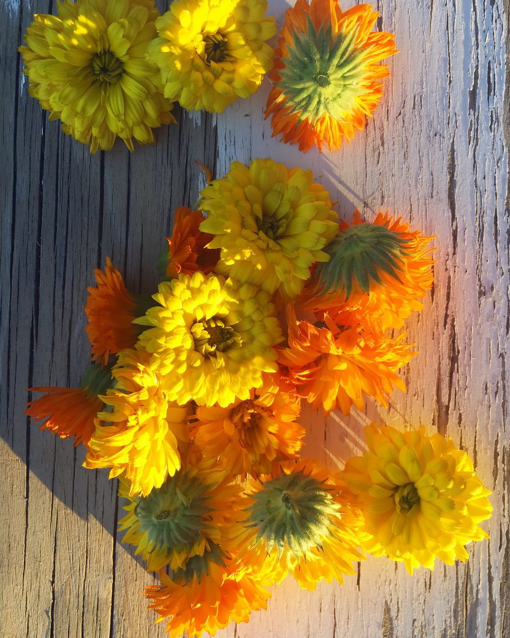 Calendula blossoms harvested from my garden last summer.