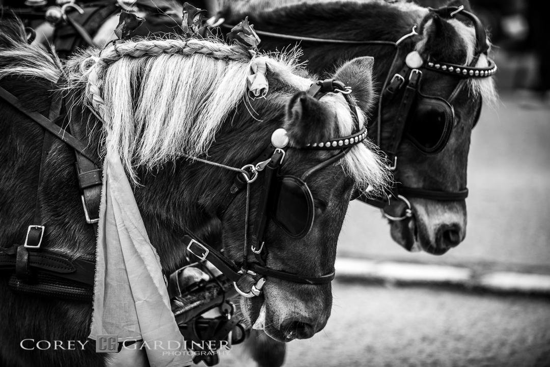 Corey Gardiner Monocrome Miniature Horses-1