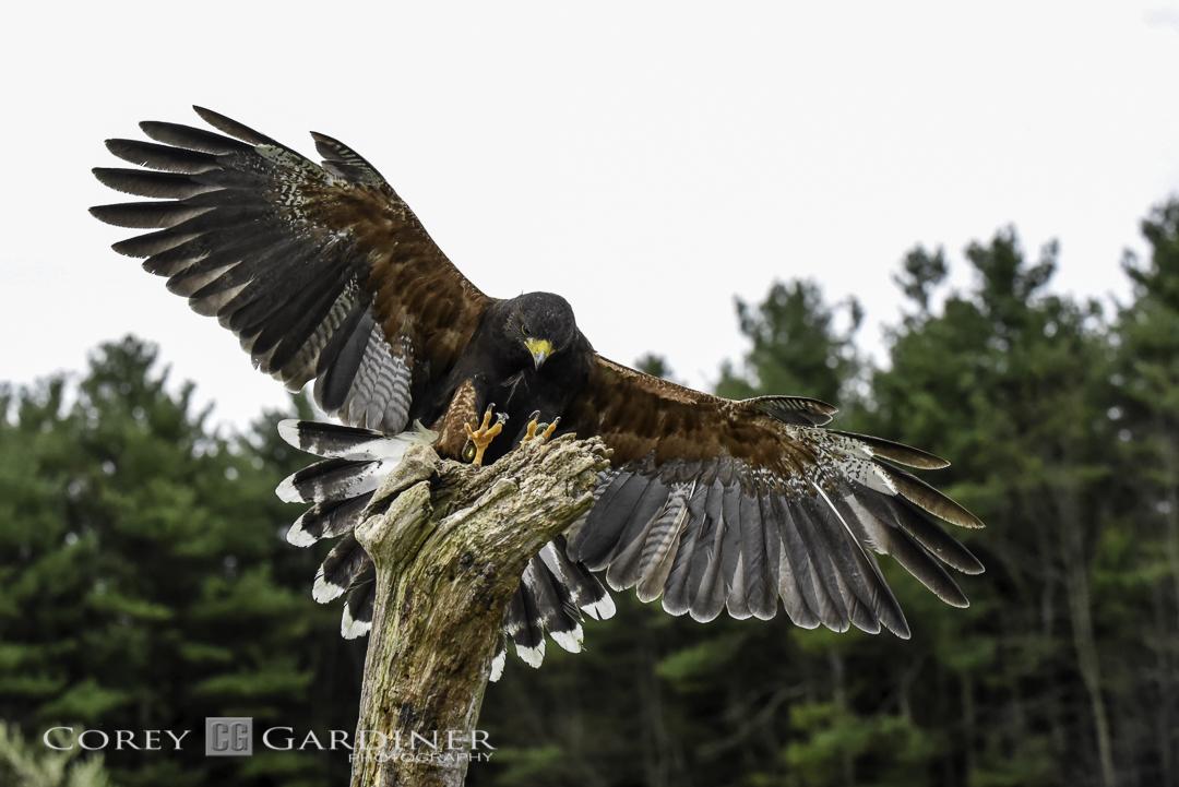 canadian-raptor-conservancy-2016-web-use-1