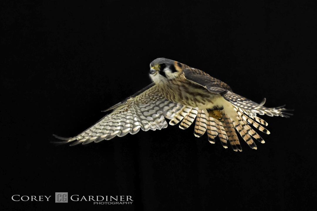 canadian-raptor-conservancy-2016-web-use-11