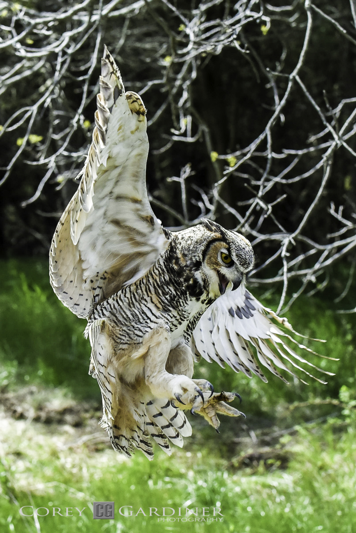 canadian-raptor-conservancy-2016-web-use-12
