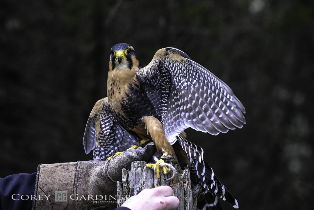 canadian-raptor-conservancy-2016-web-use-16