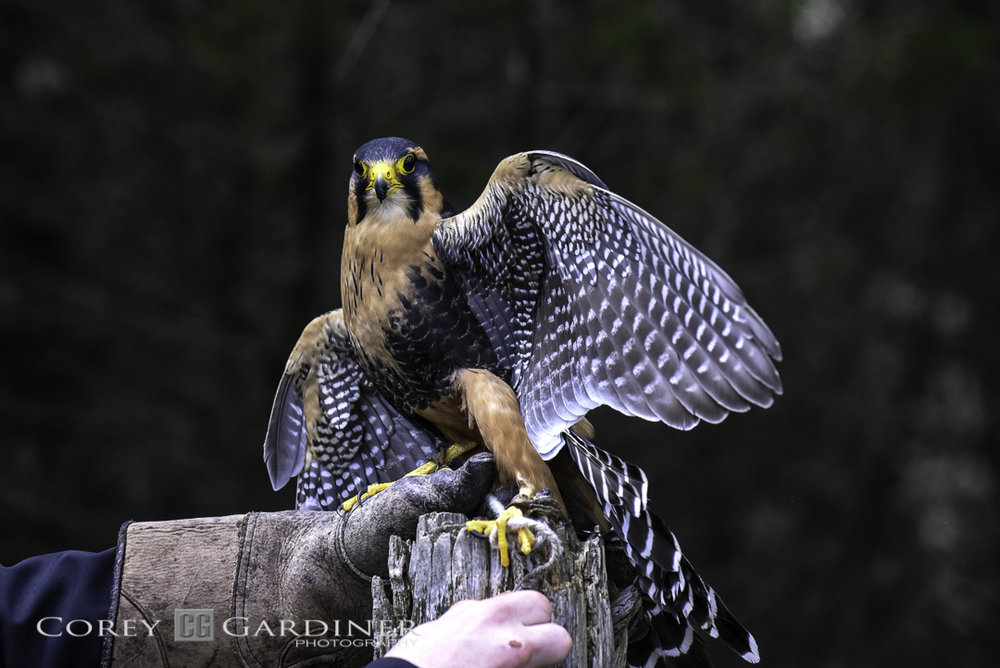 canadian-raptor-conservancy-2016-web-use-16