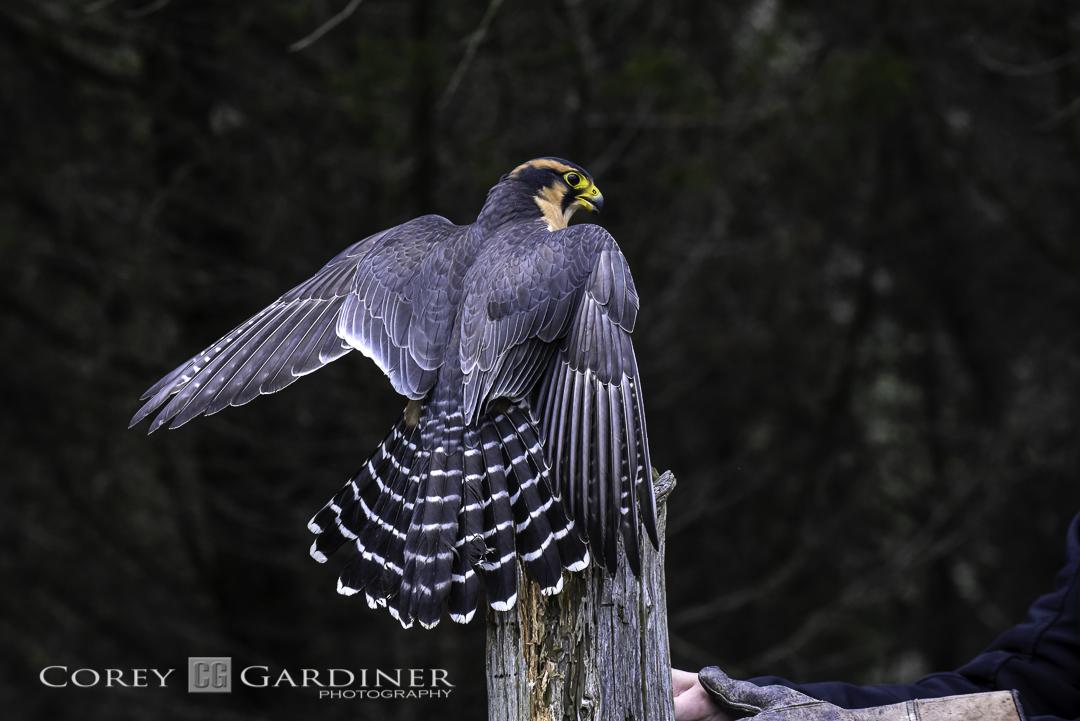 canadian-raptor-conservancy-2016-web-use-17
