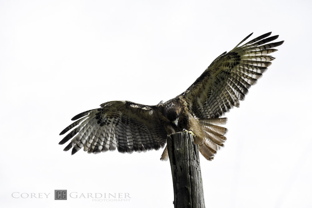 canadian-raptor-conservancy-2016-web-use-2