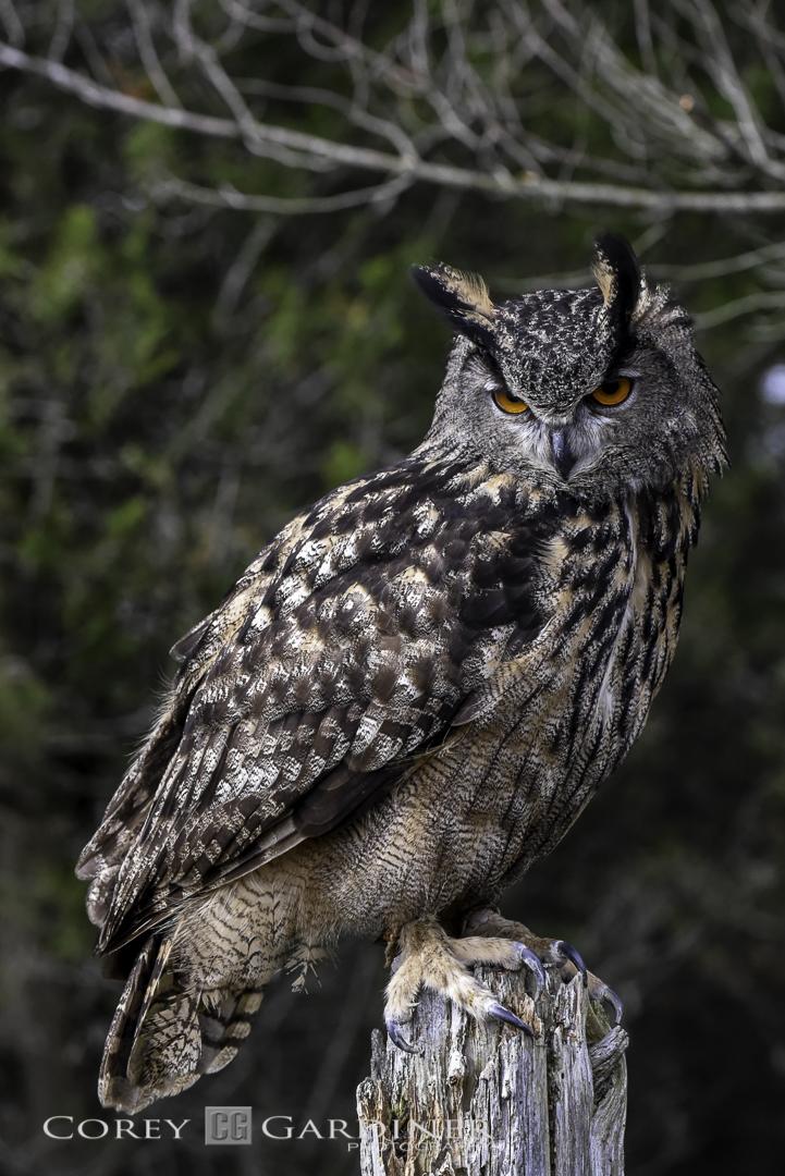canadian-raptor-conservancy-2016-web-use-3