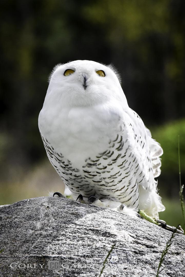 canadian-raptor-conservancy-2016-web-use-5