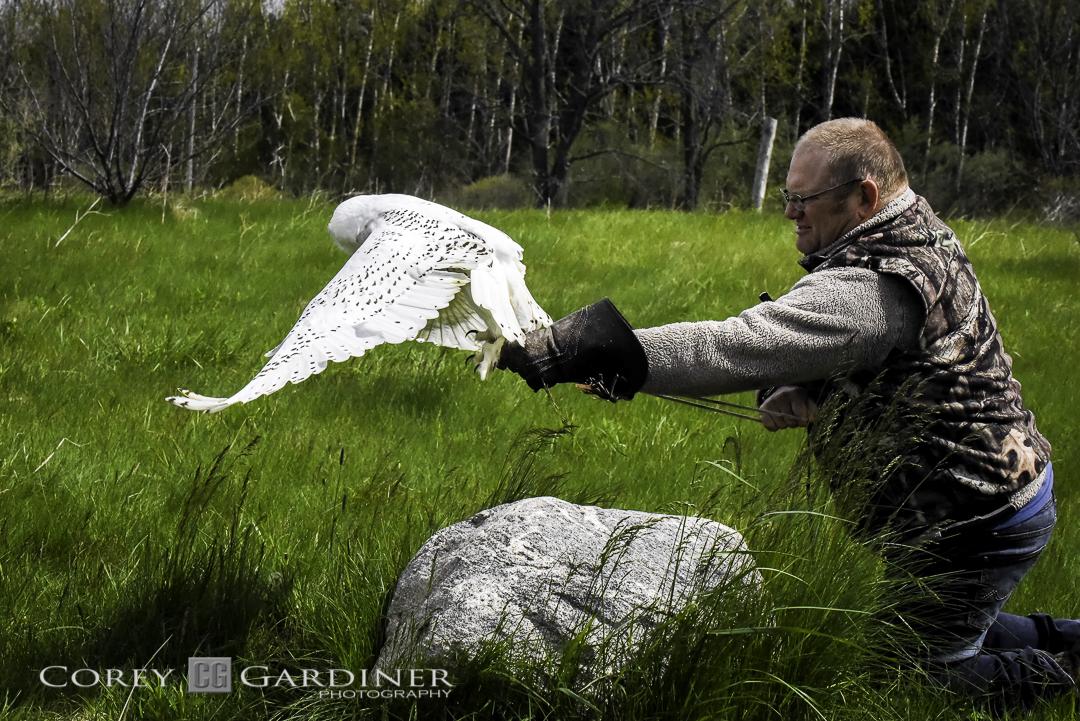 canadian-raptor-conservancy-2016-web-use-6