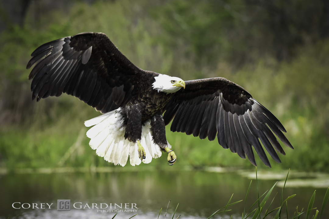 canadian-raptor-conservancy-2016-web-use-7