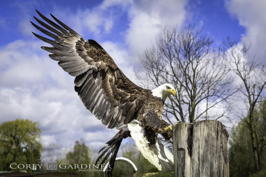 canadian-raptor-conservancy-2016-web-use-8