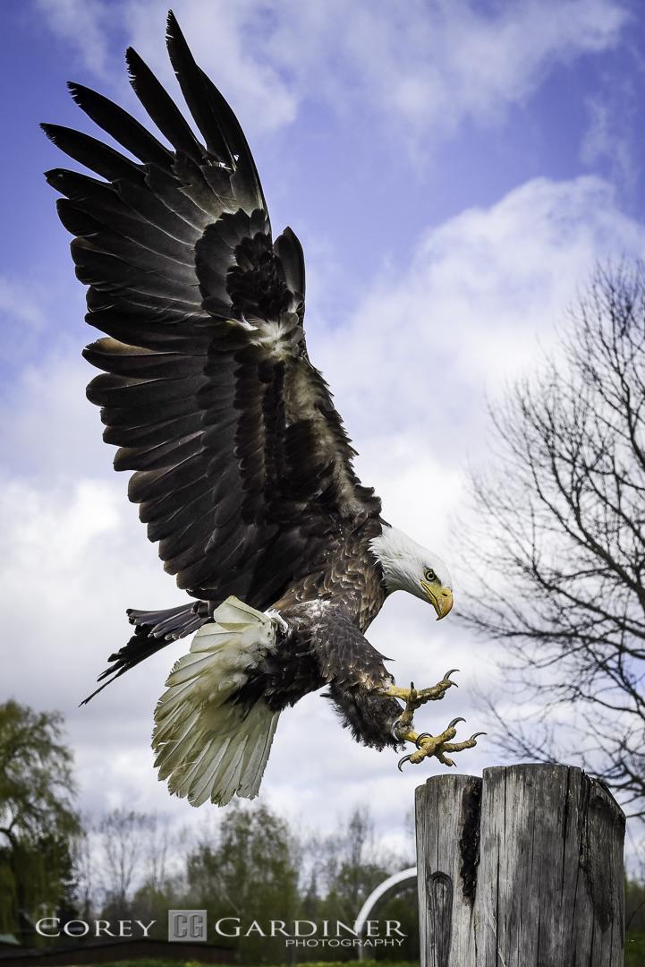 canadian-raptor-conservancy-2016-web-use-9