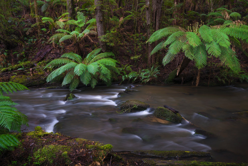 Upstream from Triplet Falls - Nikon D800 @ ISO 100 | f/11 | 25mm | 2 sec